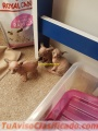 Stunning male and female sphynx kittens available for rehoming