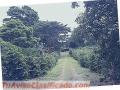 The Farm  Volcancito, Boquete: coffee plantation in Boquete, Republic of Panama. 78 acres.