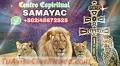 sacerdote-maya-curandero-y-brujo-indigena-en-samayac-011502-45672525-4584-2.jpg